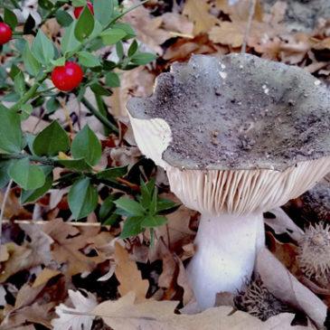 Incontro sui funghi primaverili