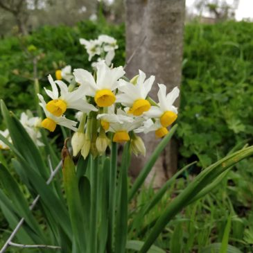 Escursione per erbe spontanee presso Biofattoria L'Aia